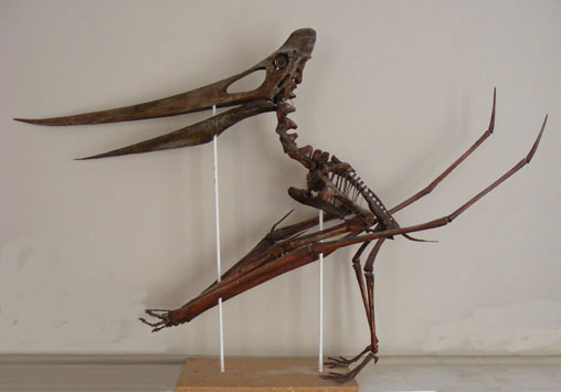 Full scale skeleton models of pterosaurs