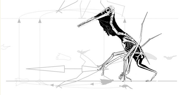 Pterosaur walking matched to tracks